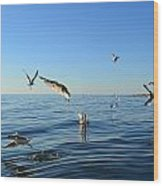 Seagulls Over Lake Michigan Wood Print