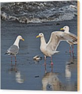 Seagulls Passion Wood Print
