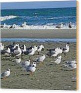 Seagulls Waiting  Wood Print