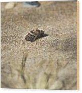 Seahells V3 Wood Print
