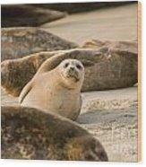 Seal 4 Wood Print