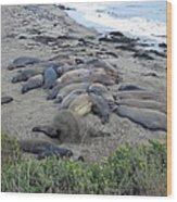 Seal Spa. Sand Bath Wood Print