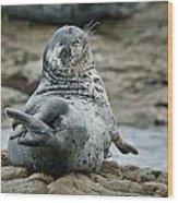 Seal Stretch Wood Print