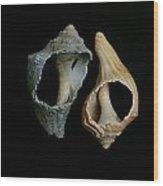 Seashell 023 Wood Print