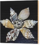 Seashell Floral Wood Print