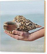 Seashell In Hand Wood Print