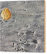 Seashell In The Sand Wood Print