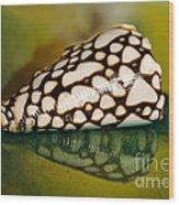 Seashell Wall Art 4 - Conus Marmoreus Wood Print