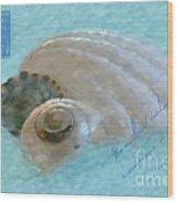 Seashells In Aqua Wood Print