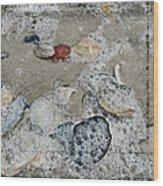 Seashells In The Surf Wood Print