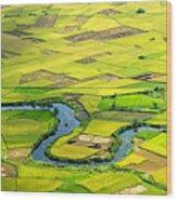 Season Grain Wood Print