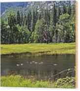 Seasonal Duck Pond Wood Print