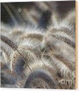 Seasonal Softness Wood Print