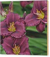 Seattle Blooms  Wood Print