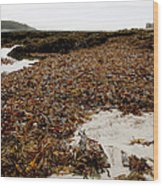 Seaweed Covered Beach Wood Print
