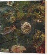 See Of Fossil Three Wood Print