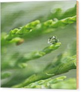 See The World In The Morning Dew  Wood Print