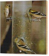 Seed Eating Song Birds Wood Print