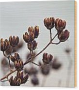 Seed Pods 2 Wood Print