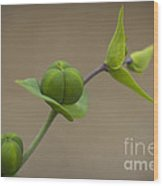 Seed Pods Wood Print