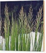 Seedy Grass Wood Print