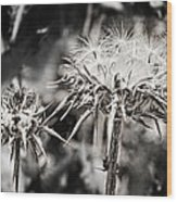 Seedy Neighborhood In Bw Wood Print