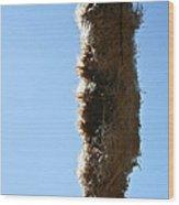 Seedy Wood Print