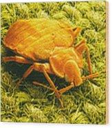 Sem Of A Bed Bug Wood Print