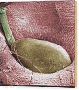 Sem Of A Strawberry Seed Wood Print