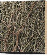 Sem Of Mycelium On Mushrooms Wood Print