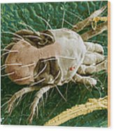 Sem Of Two-spotted Spider Mite Wood Print