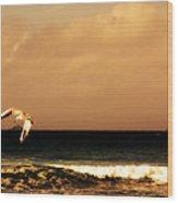 Sennen Seagull Wood Print