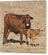 Senopol Surrogate With Calf Wood Print by Science Source