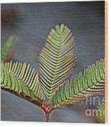 Sensitive Wood Print