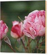 Sentimental Rose Wood Print