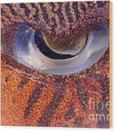 Sepia Cuttlefish Wood Print
