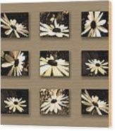 Sepia Daisy Flower Series Wood Print by Sumit Mehndiratta