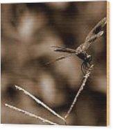 Sepia Dragonfly Wood Print