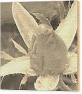 Sepia Rose Bud Wood Print