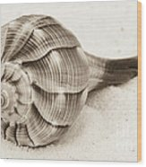 Sepia Shell Wood Print
