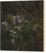 September Blues Wood Print