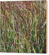 September Grasses By Jrr Wood Print