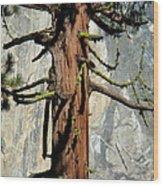 Sequoia And El Capitan Wood Print