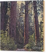 Sequoia National Park Wood Print