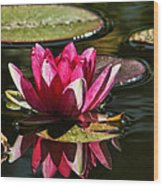 Serene Pink Water Lily Reflection Wood Print