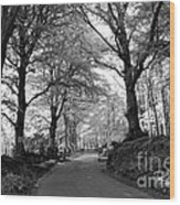 Serene Winding Country Road Wood Print