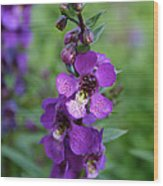 Serenita Purple Wood Print