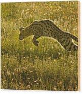 Serval Cat Pouncing Serengeti Wood Print