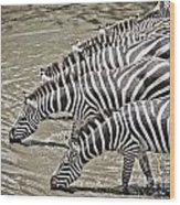 Several Thirsty Zebra Wood Print
