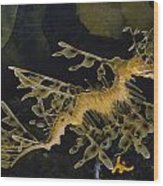 Several Views Of The Leafy Sea Dragon Wood Print by Paul Zahl